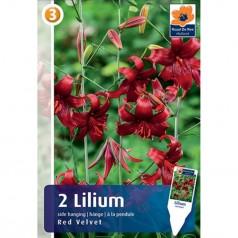 Liljer Tiger Red Velvet - Lilium - 2 løg