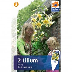 Trælilje Lilium Tree Honeymoon - 2 Løg