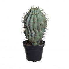 Kunstig kaktus 18 cm. pigge