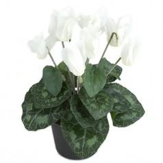 Alpeviol - Hvid - Kunstig Potteplante