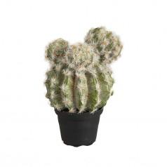 Kunstig kaktus 20 cm.