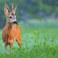 Vildtblanding, Hjorte, Hare & Fugle - 10kg