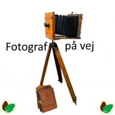 Tuja plicata Whipcord - Dværgthuja / 60 cm. stamme