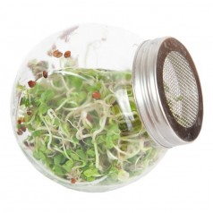 Spireglas inkl. Kinaradise spirer frø