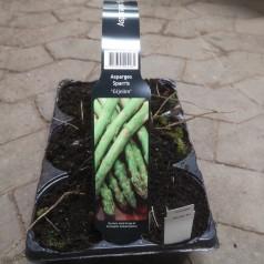 Asparges planter Gijnlim - Tidlig - 6 stk. i bakke