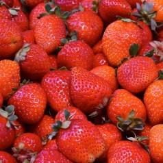 Jordbærplanter Salsa - Middeltidlig - 6 Pack