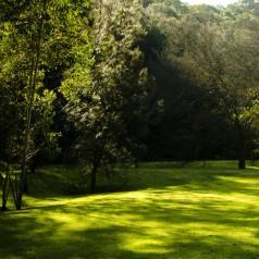 Græsfrø til skygge