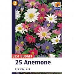 Anemone Blanda mix - Blandede farver - 25 løg