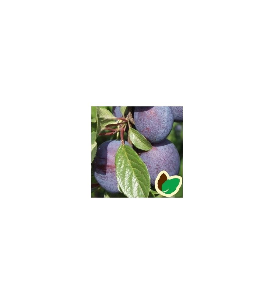Blommetræ Valor