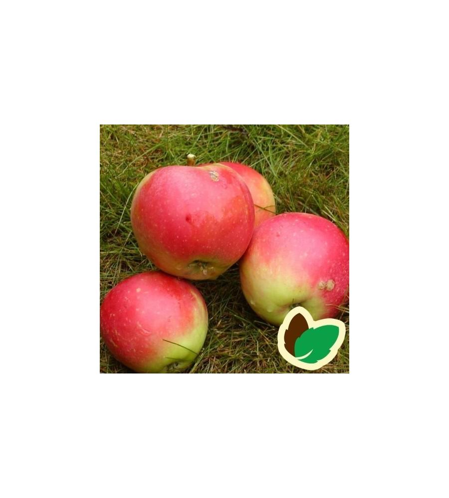 Æbletræ Rød James Grieve
