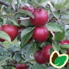 Cider Æbletræ Tremlett's Biter