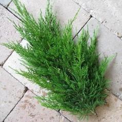Enebær grøn - Pyntegrønt