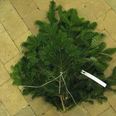 Nordmannsgran 1kg - Pyntegrønt