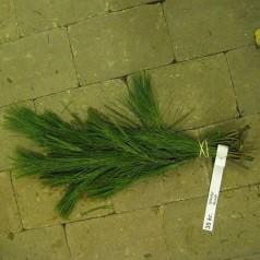 Silkefyr - Pyntegrønt