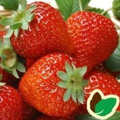 Jordbærplanter Hindbærjordbær