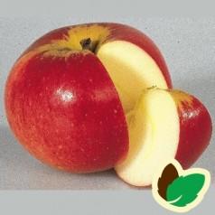 Æbletræ Werdenberg