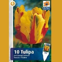 Tulipan Texas Flame / Papegøje Tulipan - 10 Løg