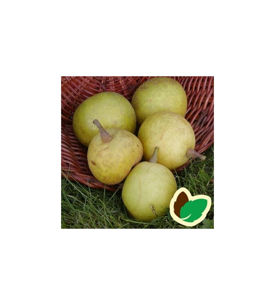 Asiatisk pære Hosui - Nashi Pære