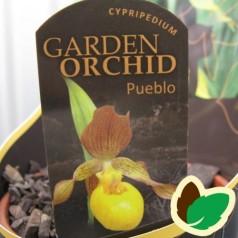 Cypripedium Pueblo - Fruesko / Haveorkide