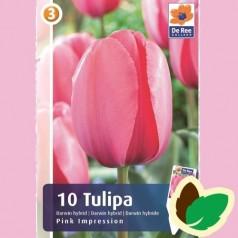 Tulipanløg Pink Impression / Darwin Tulipan - 10 Løg