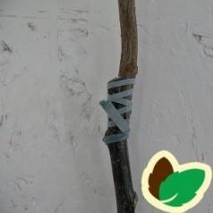 Pode elastikker 140x3,5 mm / Flexi-Band