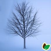 Træer til haven