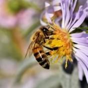 Insekt & bivenlige blomster