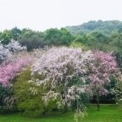Buske & træer