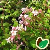Dronningebusk - Stort udvalg af haveplanter