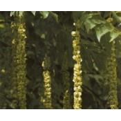 Vingevalnød - Stort udvalg af haveplanter