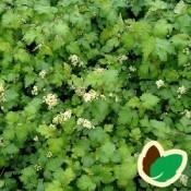 Kranstop - Stort udvalg af haveplanter