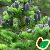 Se vores udvalg indenfor grantræer