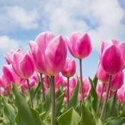Blomsterløg EFTERÅR