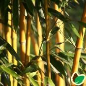 Bambus Planter