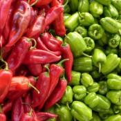 Peberfrø & Chilifrø i alle styrker | Stort udvalg i grøntsagsfrø