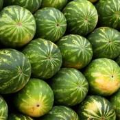 Melonfrø & Græskarfrø