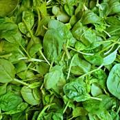 Spinat frø - Stort udvalg af Grøntsagsfrø - Kridtvejs Planter