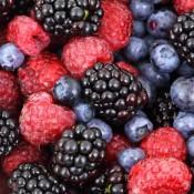 Bærbuske | Stort udvalg i bærbuske til haven